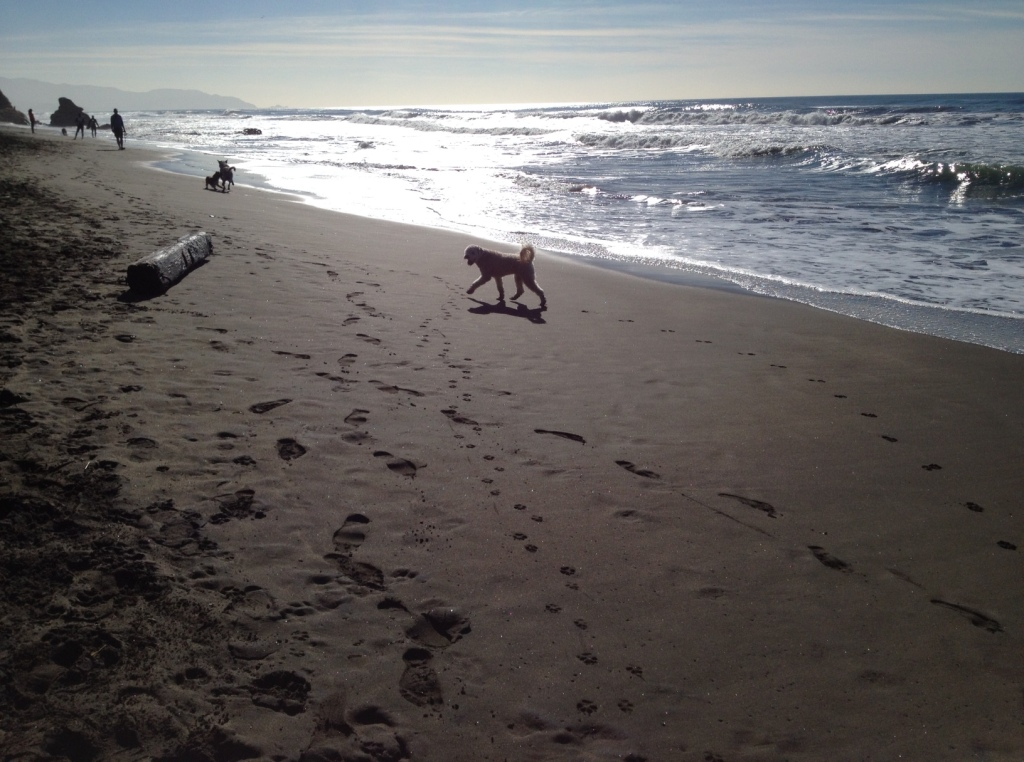 Picture Perfect Day at Fort Funston
